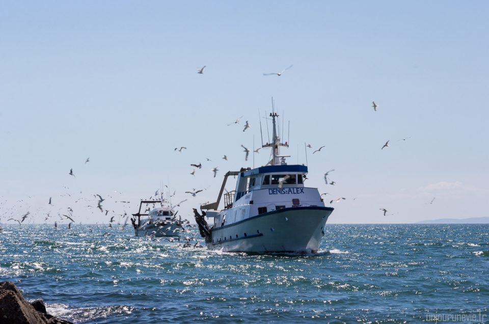 Un retour de pêche au port du Grau du Roi