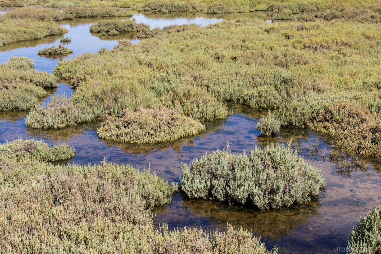 sentier-de-la-marette-lagune